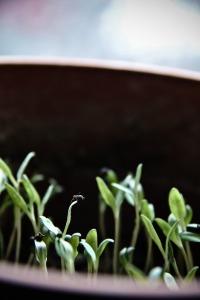 seedling-687152_1280